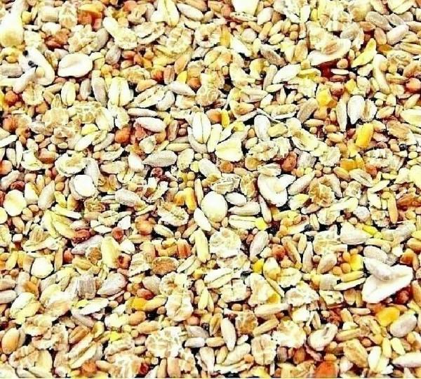 schalenfrei Wildvogelfutter witte molen 3 kg im Eimer